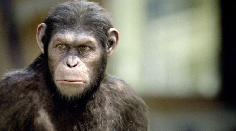Le-singe-Cesar-dans-La-Planete-des-singes-Les-origines_width1024
